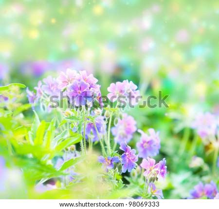 Forget-me-nots against a field - stock photo