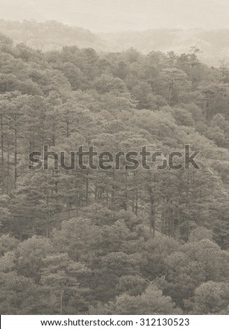 Forrest of green pine trees on mountainside with rain in Dalat, Vietnam. - stock photo