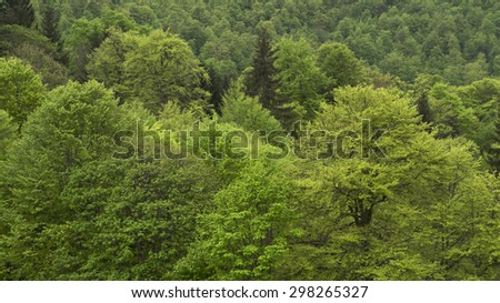 Forrest of green trees on mountainside - stock photo