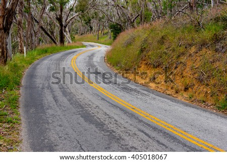 Forrest with a curvy road leading away from the viewer - stock photo