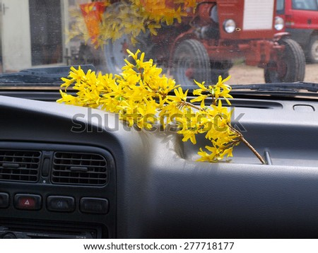 Forsythia flower bunch in the car on front window panel - stock photo