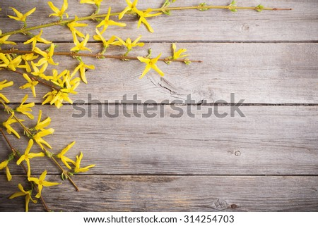 Forsythia on wooden background - stock photo