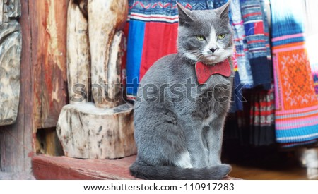 Fortune at with serious face for commercial using front view - stock photo