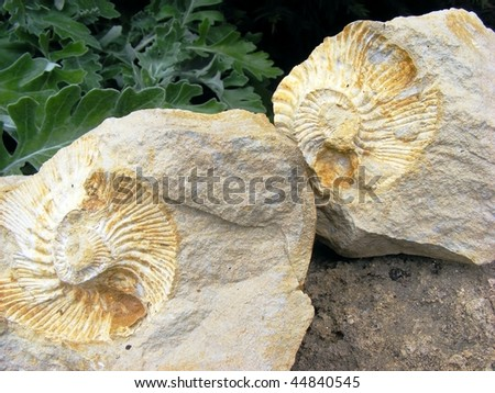 Fossil footprints in stone clams in a spiral on a background of green plants - stock photo