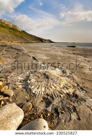 Fossil hunting on the Dorset coastline - stock photo
