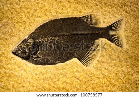 Fossil of ancient prehistoric fish on rock - stock photo