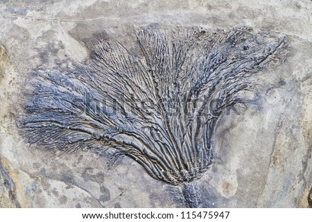 fossil record of plants - stock photo