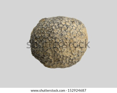 fossilized coral - stock photo