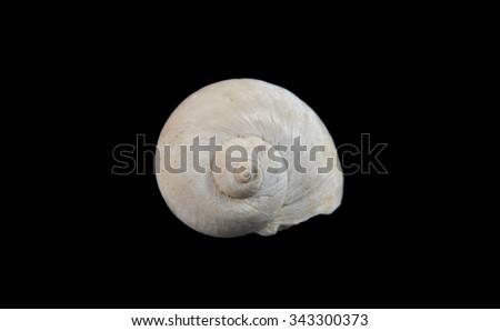 Fossilized seashells. Class: Gastropoda  Subclasses: Prosobranchia.  Neogene Period - stock photo