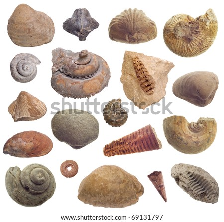 fossils collection - stock photo