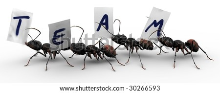 "Four ants carrying fragments of paper, each with a letter that spells the word ""team"". Good concepts for organized efforts. - stock photo"