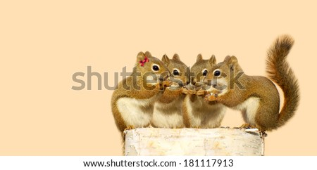 Four baby squirrels on a birch log sharing some sunflower seeds, with copy space. Part of a fun series.  - stock photo