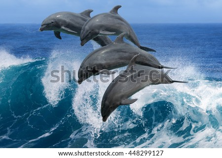Four beautiful dolphins jumping over breaking waves. Hawaii Pacific Ocean wildlife scenery. Marine animals in natural habitat. - stock photo