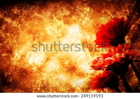 Four beautiful red gerbera . Retro aged photo with scratches. - stock photo