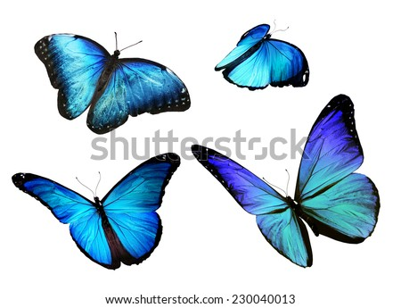 Four blue butterfly, isolated on white background - stock photo