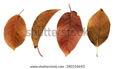 Four brown autumn leaves - stock photo
