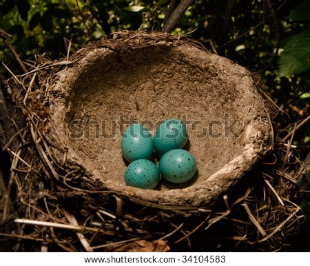 Four eggs in a nest of a song thrush. Colour of eggs as for Easter - stock photo