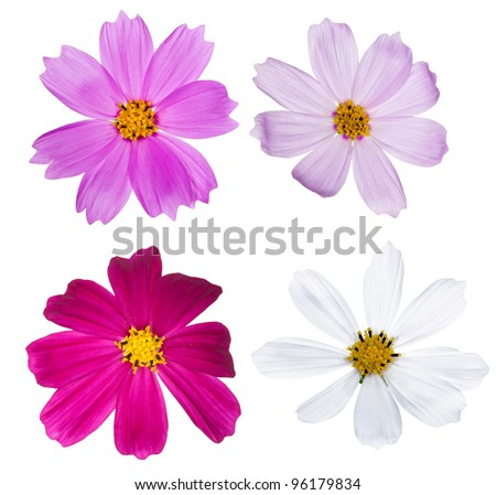 four flowers isolated on white background - stock photo