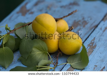 Four fresh apricots on stem with leaves on blue wooden background - stock photo