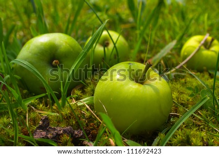 Four green apples in grass - stock photo