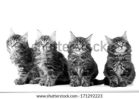 four kittens - stock photo