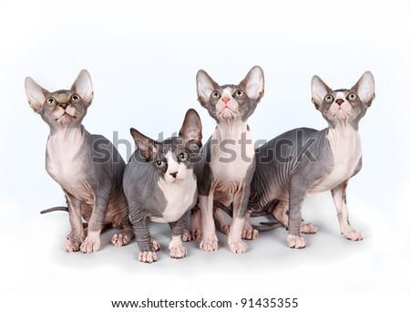 Four kittens on white background - stock photo