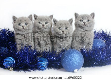 Four kittens with Christmas balls on a white background. - stock photo