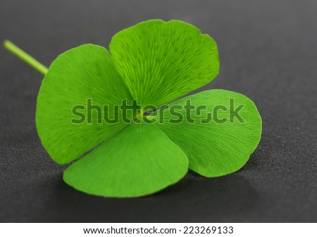 Four Leaf Clover leaf on gray surface - stock photo