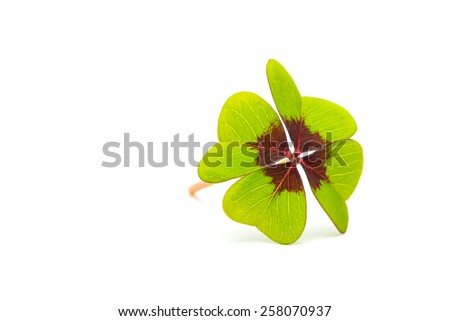 Four-leaf clover on white background - stock photo