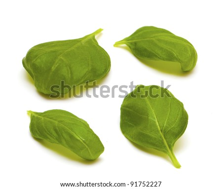 four leafs of basil isolated on white background - stock photo