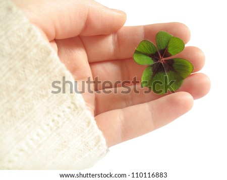 Four Leave Clover - stock photo