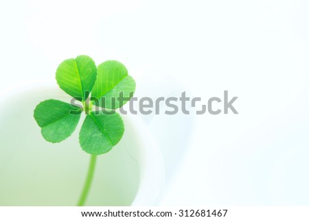 Four leaves, clover - stock photo