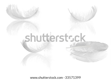 four light feathers with reflections isolated on white background - stock photo