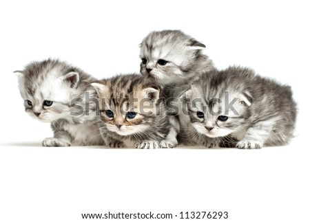 Four little kitten - stock photo