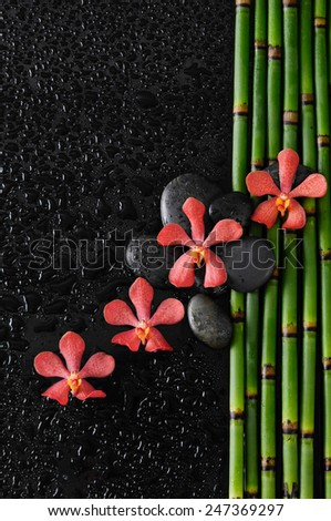 Four orchid with black stones on bamboo grove on wet background - stock photo