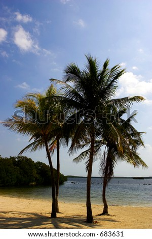 Four palm trees on a beach, Florida Bay, Everglades, USA - stock photo