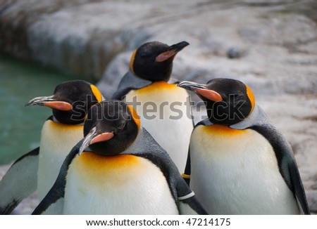 four Penguins - stock photo