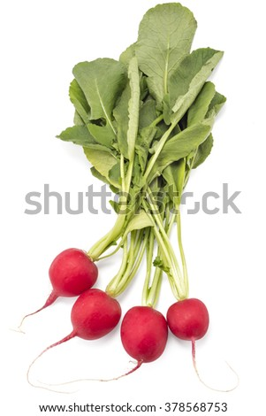 Four raw organic small garden radishes with leaves isolated on white background - stock photo