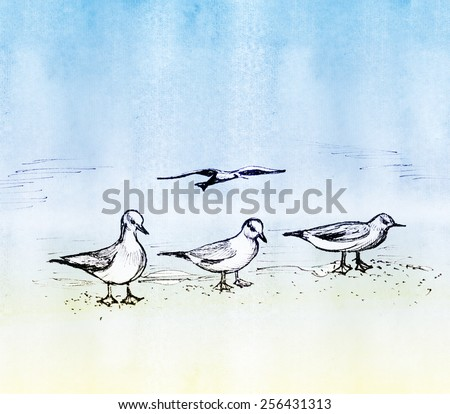Four seagulls - three sit on the sand and one flies. Pencil drawing. - stock photo