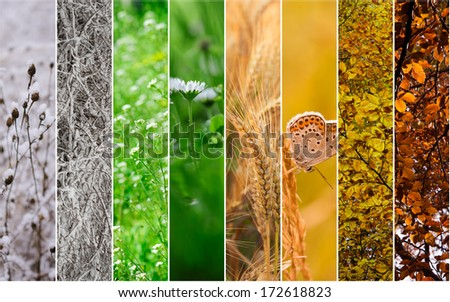 Four seasons collage: Winter, Spring, Summer, Autumn.  - stock photo