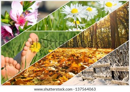 four seasons / four seasons - stock photo