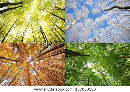 Four seasons in the forest - stock photo