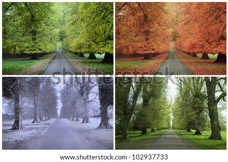 Four Seasons of a Row of Lime Trees - stock photo