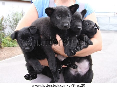 four small dogs - stock photo