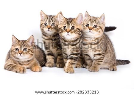 Four striped kitten (isolated on white) - stock photo