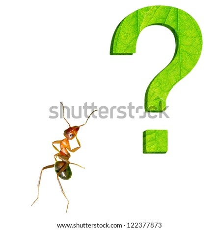 Four the ants carrying leaves. - stock photo
