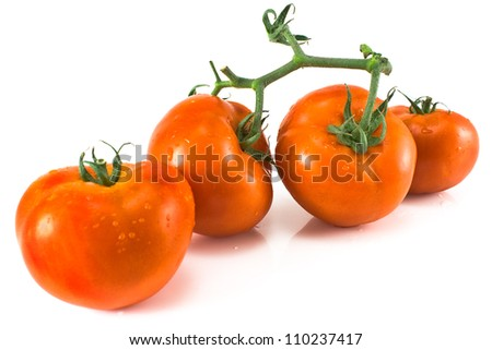 Four tomatoes with petiole isolated on white - stock photo