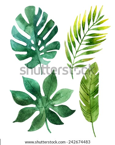 Four tropical leaves. Hand drawn leaves illustration in watercolor. - stock photo