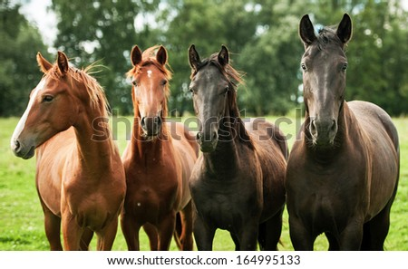 Four young horses on the pasture - stock photo