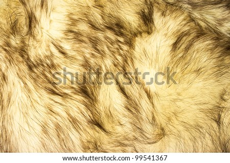 Fox fur texture for background - stock photo